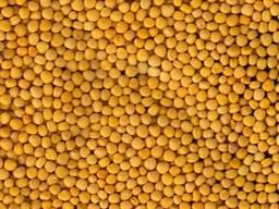 Реализуем на экспорт рапс лен подсолнечника горчицу пшеницу