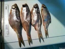 Рыба вяленая, копченая, соленая в ассортименте