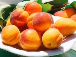 Саженцы персика, абрикоса, нектарина