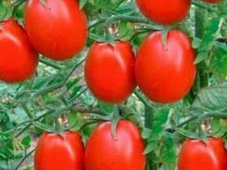 Семена овощей и цветов на разве!