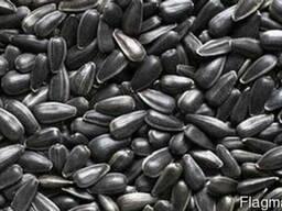 Семена подсолнечника , семена сафлора ,льняное масло ,соя