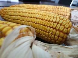 Семена с гарантированной урожайностью. Проверенно!