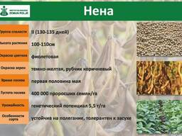 Семена сои 1 репродукции