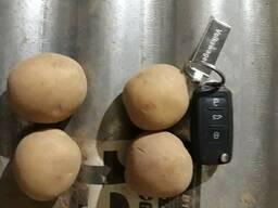Семенной картофель 2 репродукции