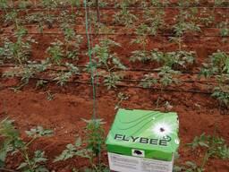 Шмель для опыления растений Flybee