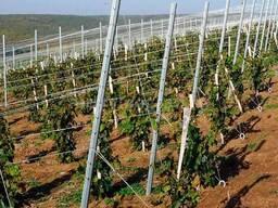 Шпалеры (столбы) оцинкованные для привязки винограда, малины