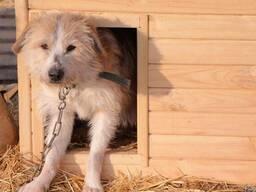 """Собака Жора из приюта """"Хвостатый Рай"""""""