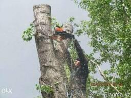 Спиливание деревьев , спил деревьев , веток , кронирование,