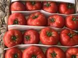 Свежие помидоры - фото 1