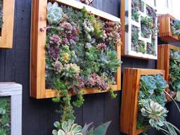 Вертикальное озеленение. Живые картины. Фитокартины.