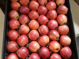 Яблоки - photo 2