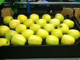 Яблоки - photo 4
