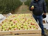 Яблоки Гренни Смит и Пинк Лади