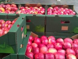 Яблоки и груша на Тараз - фото 2