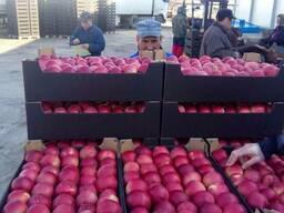 Яблоки и груша на Тараз - фото 3