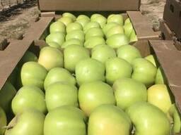 Яблоки сорта Golden Delicious ( Золотой превосходный) - фото 4