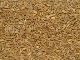 Куплю пшеницу с элеватора казахстан курсовая работа детали машин привод конвейера