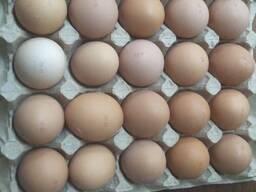 Яйцо куриное пищевое, кремовое, коричневое