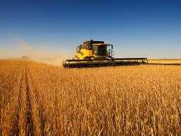 Куплю пшеницу, лен, чечевицу, сафлор, рапс