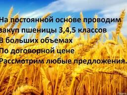 Закупаем пшеницу 3,4,5 го классов