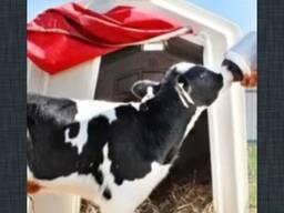ЗЦМ заменитель цельного молока 16% для телят и поросят.