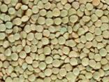 Зеленая чечевица (Green lentils) - photo 1
