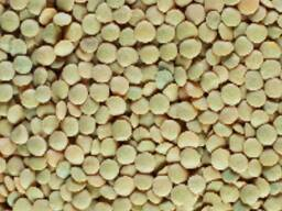 Зеленая чечевица (Green lentils)