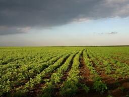 Земли сельхозназначения (Айыртауский район, СКО)