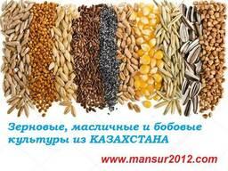 Зерновые, масличные и бобовые культуры