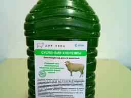 Живая хлорелла для овец